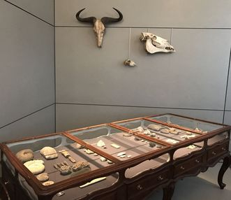 Table display case from the prince-elector's Natural History Cabinet. Image: Staatsanzeiger für Baden-Württemberg, Petra Schaffrodt