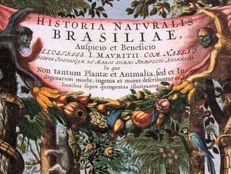 Historia Naturalis Brasiliae, 1648